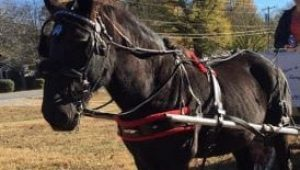 Carriage Horse Flash